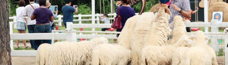Sweep Sheep Farm